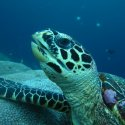 6. Meet the turtles surround Penida