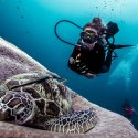 3. Diving with turtles around the Gilis