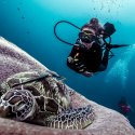 7. diving with Mantadive
