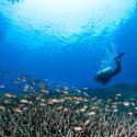 6. best diving places near padang bai