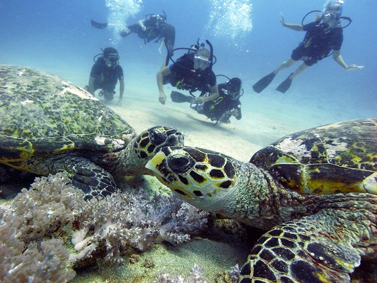 Diving gili islands dive center manta dive - Manta dive gili air ...